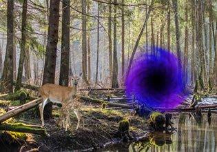 Mysterious Forest Portal EscapeFan
