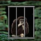 Orangutan Escape EscapeGamesZone