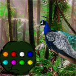 Peacock Dance Forest Escape WowEscape