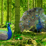 Peafowl Forest Escape Games2Rule