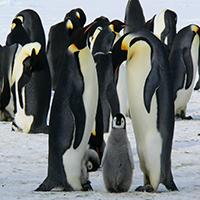 Penguins Swap Puzzle OceanDesJeux