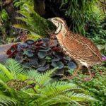 Quail Bird Rainforest Escape BigEscapeGames