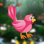Rescue Little Bird AvmGames