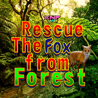 Rescue The Fox From Forest KNFGames