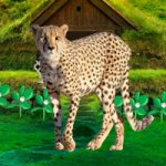 Save The Mountain Cheetah WowEscape