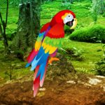 Scarlet Macaw Forest Escape Games2Rule