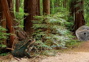 Sequoia Forest Adventure LolEscape
