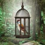 Sparrow Escape 8BGames