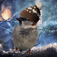 Sparrow In The Winter Puzzle WorldEscapeGames