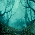 Spooky Forest Escape 8BGames