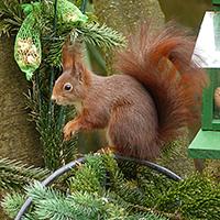 Squirrel Puzzle OceanDesJeux