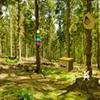 Summer Forest Escape WowEscape