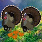 Thanksgiving Mom Turkey Escape WowEscape