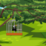 Toucan Couple Escape 8BGames