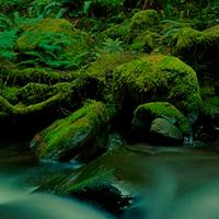 Tropical Rain Forest Escape WowEscape