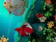 Underwater 5 Escape Cool Games 8