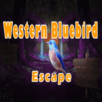 Western Bluebird Escape 8BGames