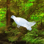 White Pigeon Forest Escape WowEscape