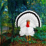 White Turkey Forest Escape BigEscapeGames
